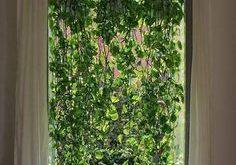 Wie Mohammed Kutbi, ein Architekt aus Mailand, Anlagen in einem minimalen Wohnraum und Fensteransicht realisiert. Pflanzen verwendet: – Golden Pothos (Epipremnum aureum) – Friedenslilie (Spathiphyllum